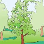 albero_r